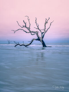 Bulls Island of the coast of South Carolina is a barrier island with many species of dead trees