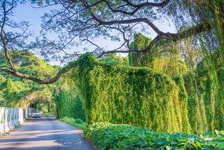 El Bosque, Havana, La Habana, Cuba, natural artwork, unique, forest, tropical forest