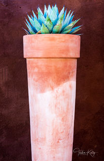 New Mexico, clay pot, aloe plant, abstract, southwestern