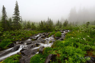 Mt. Rainer National Park, national park, mist, creek