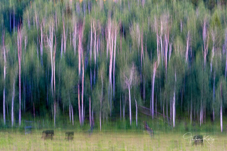 Mountain High Pasture print