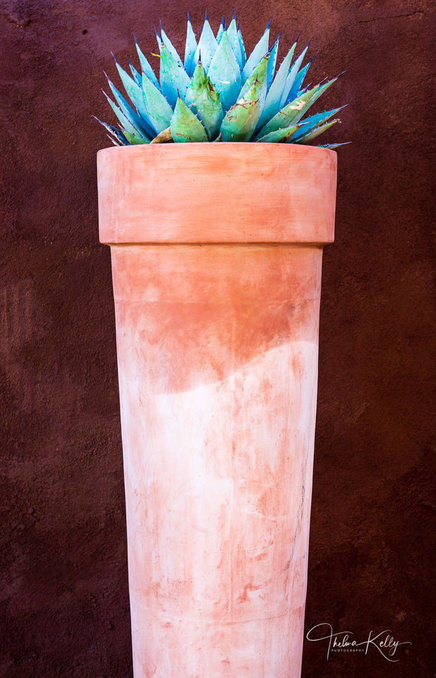 Southwestern Pot and Aloe print