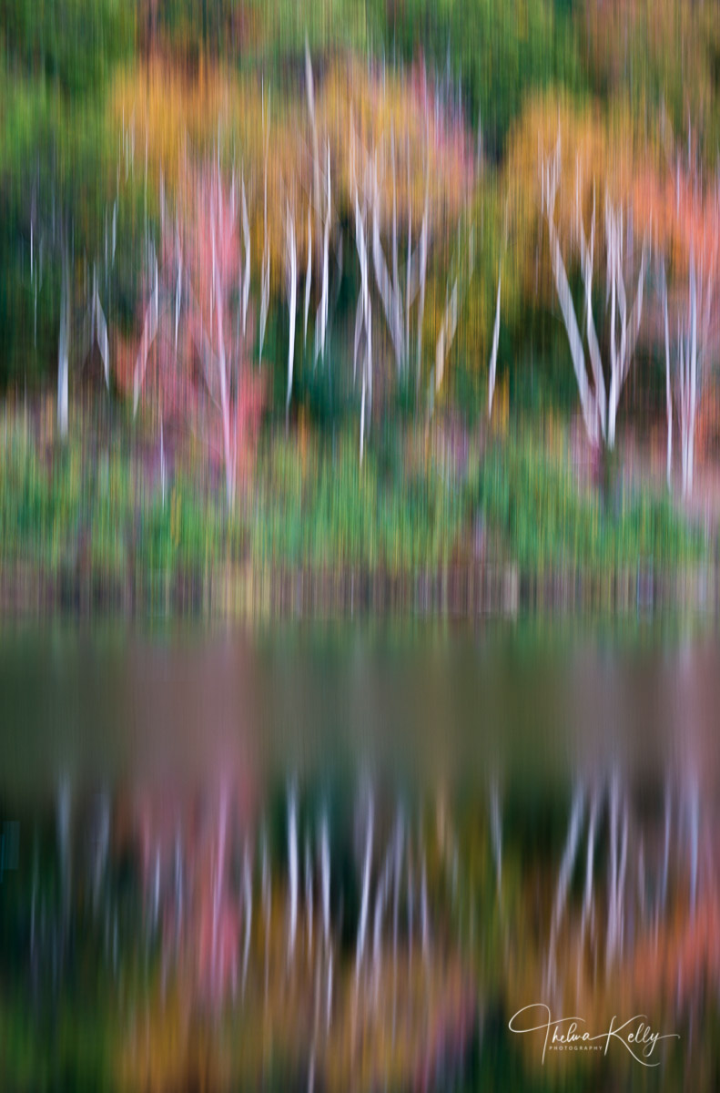 fall color, reflection, Acadia National Park, abstract, birch trees, pond, photo