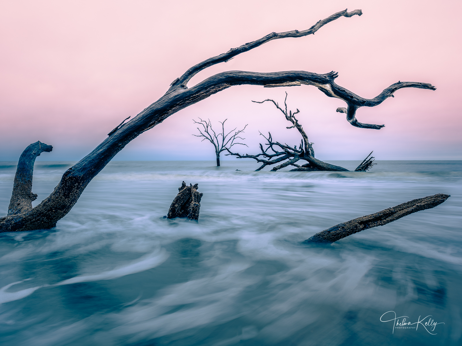 Bulls Island is a barrier island of the coast of South Carolina with many species of dead trees