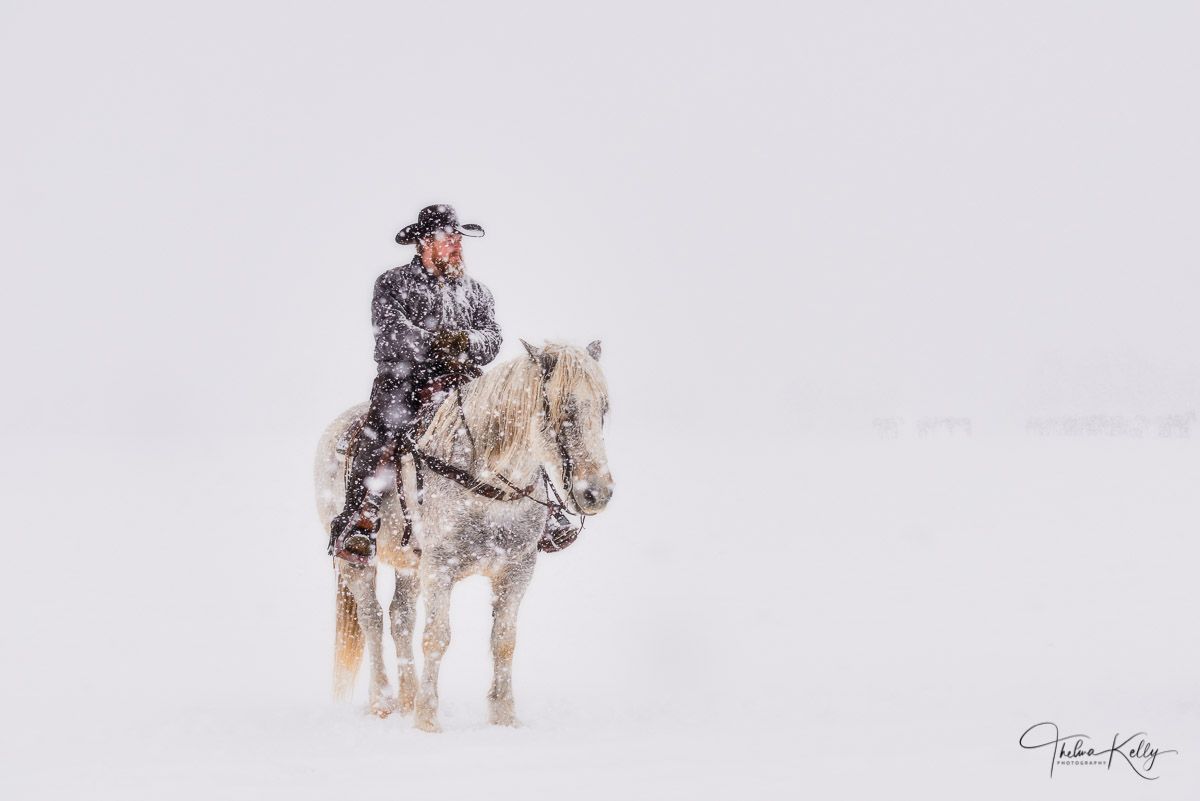 cowboy, snow horse, contemplation, photo