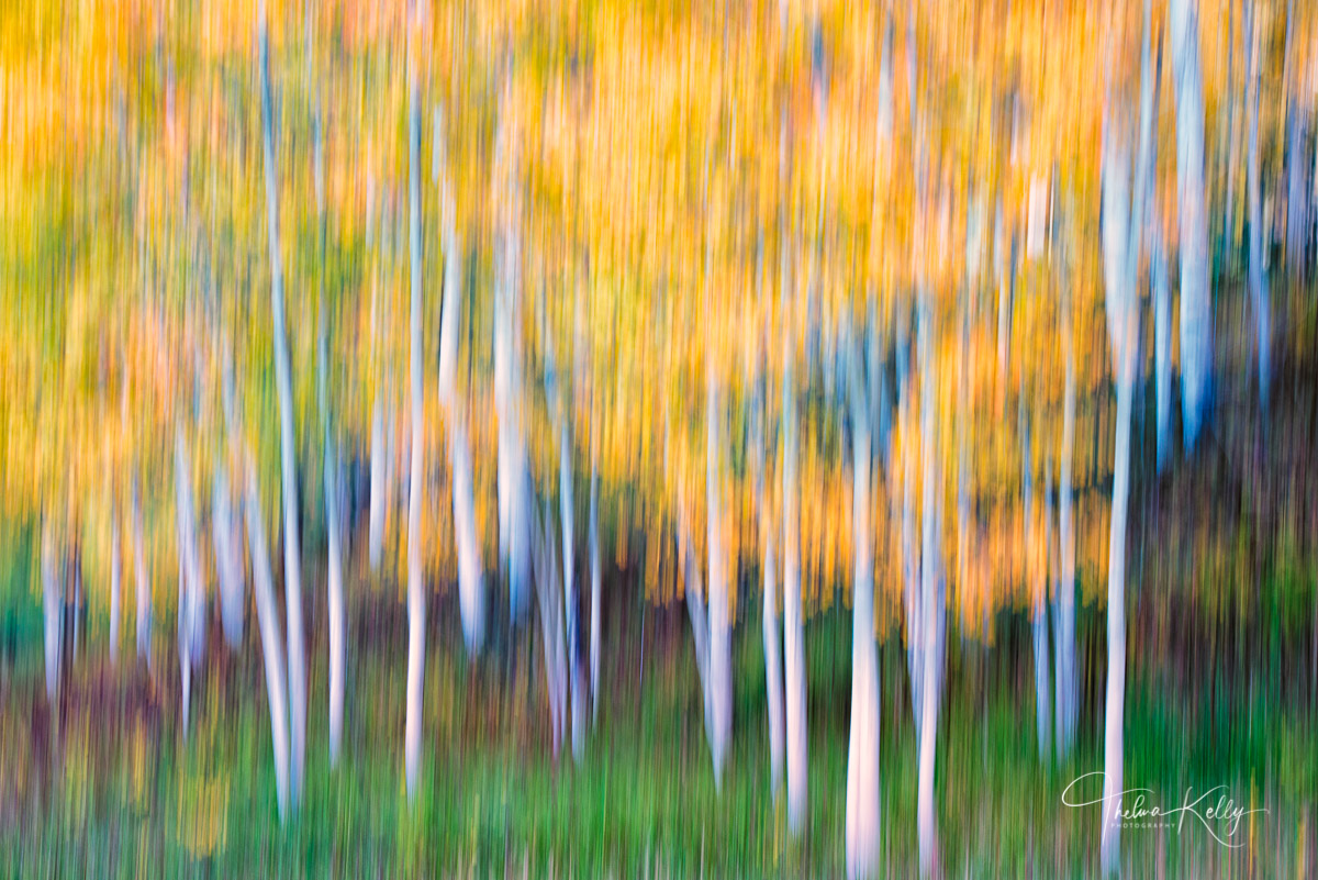 aspen, fall color, san juan, Colorado, abstract, painterly, photo