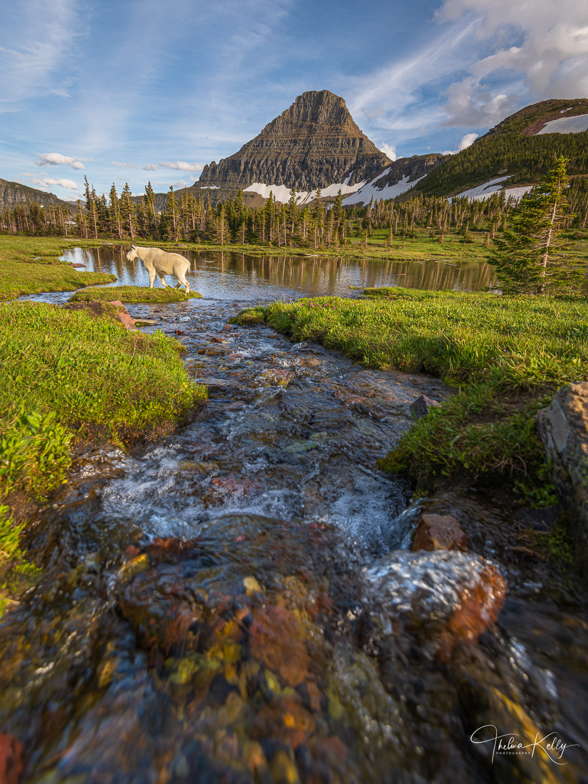 Did you know that the mountain goats in Glacier National Park are more closely related to gazelles and African antelope?  Who...