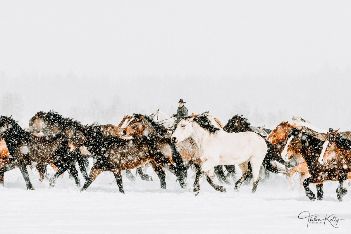 giddy up, horses, snow, photo