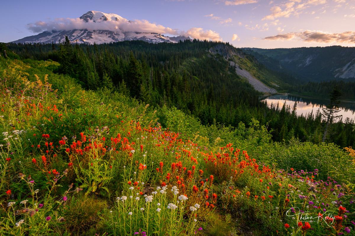 Mt. Rainer National Park, national parks, wildflowers, Indian Paintbrush, Mt. Rainer, mountains, photo