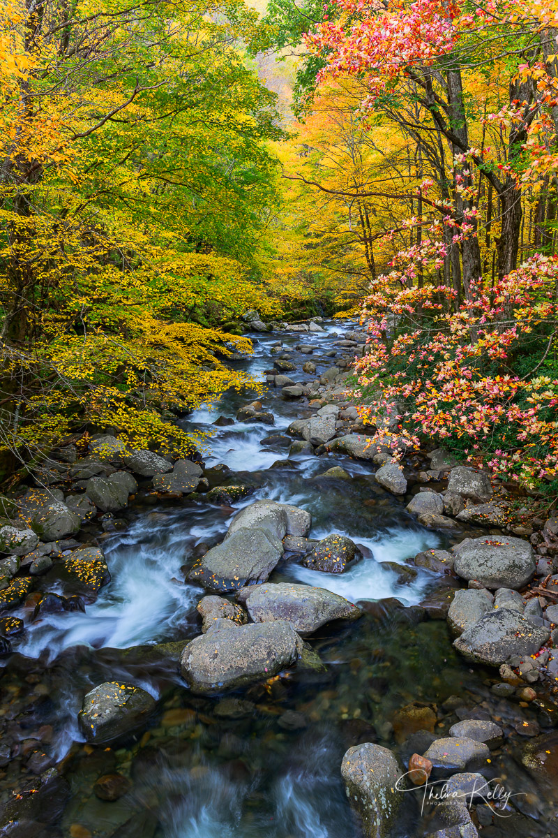 Great Smoky Mountain National Park, rivers, fall, fall color, autumn, photo