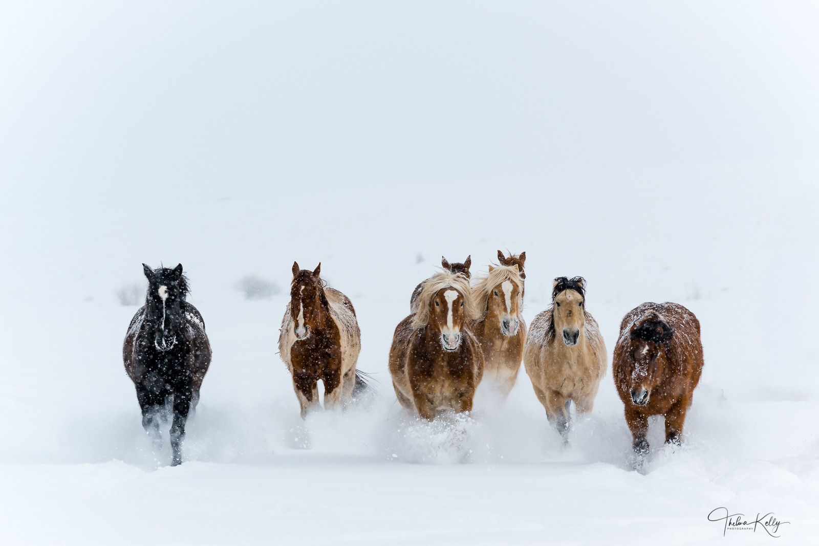 A winter wonderland horse race to the finish line!