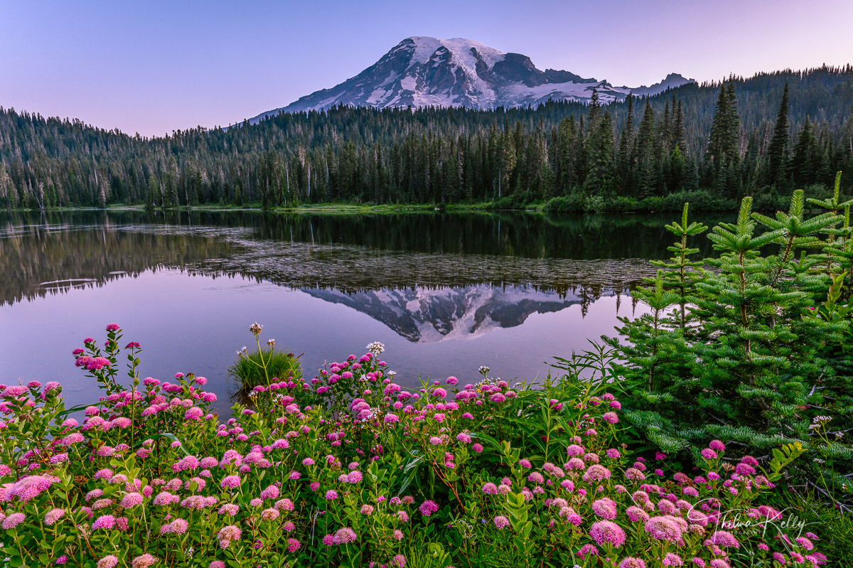 Mt. Rainer National Park, Reflection Lake, national park, wildflowers, summer wildflowers, reflection, photo