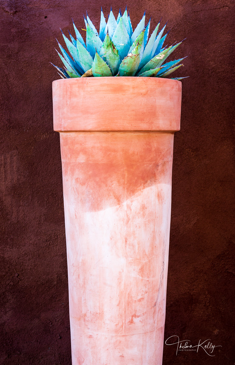 New Mexico, clay pot, aloe plant, abstract, southwestern, photo