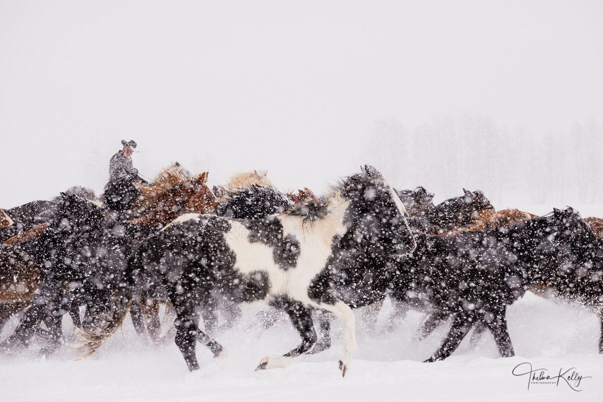cowboy, snow, western round up, horses, photo