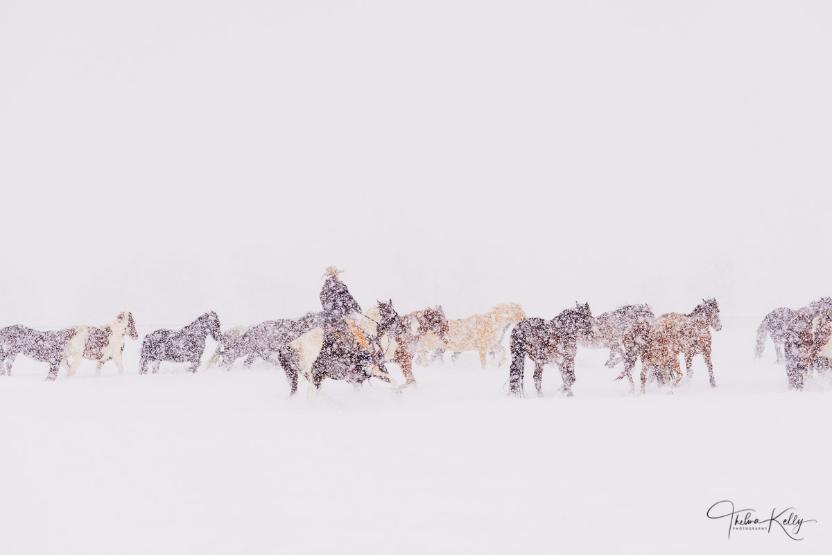 Horses, snow, round up, photo