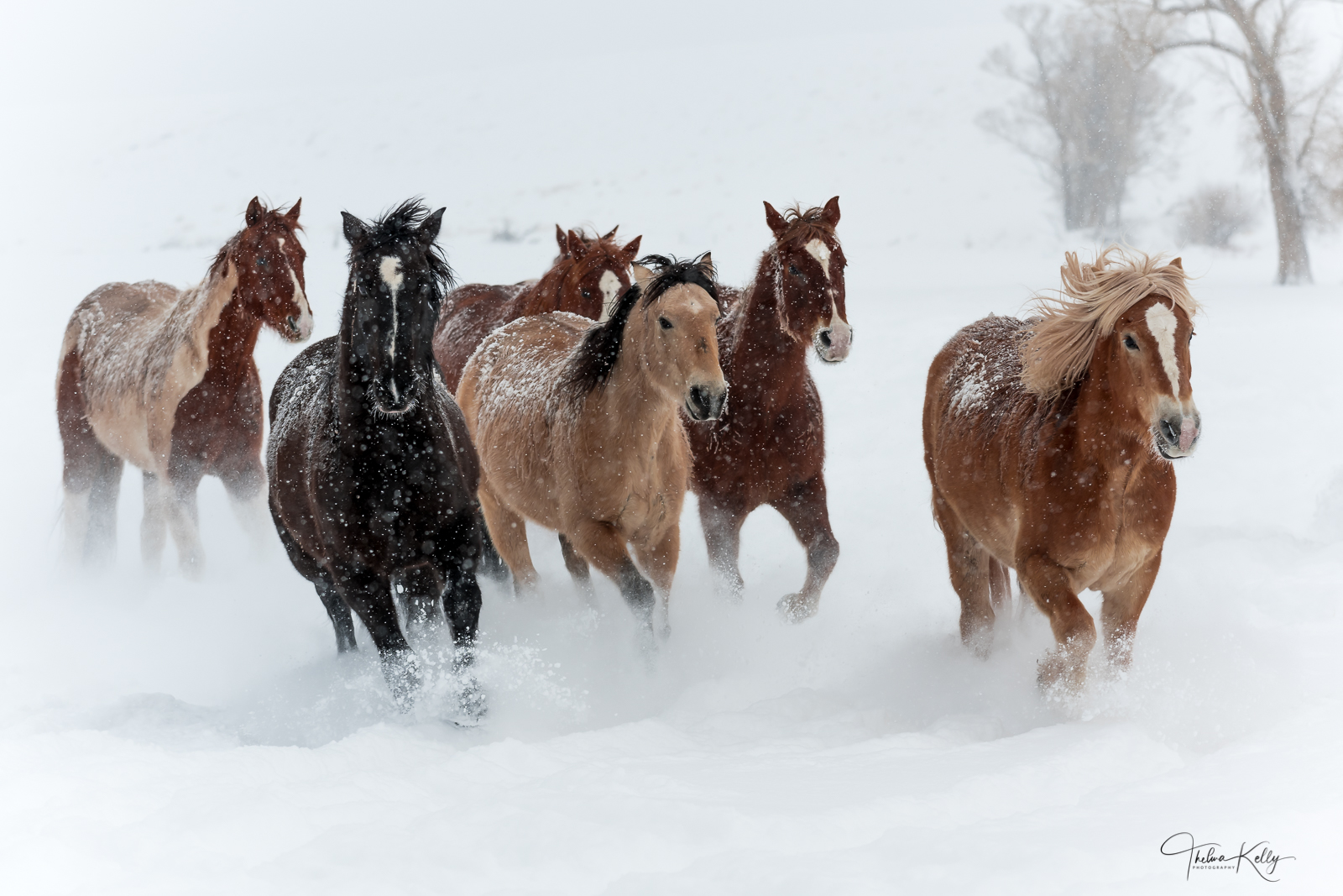 These horses are having the time of their lives racing through fresh powder!